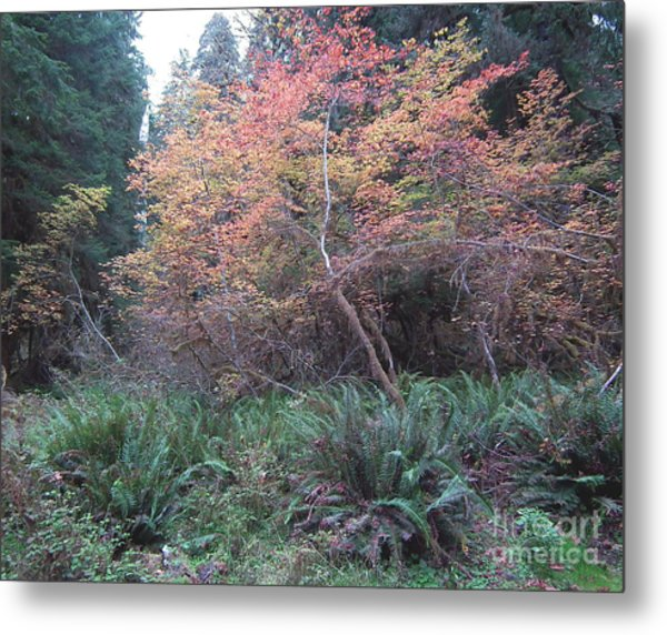 Rain Forest Fall Metal Print