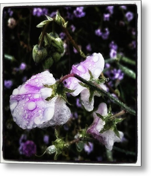 Metal Print featuring the photograph Rain Kissed Petals. This Flower Art by Mr Photojimsf