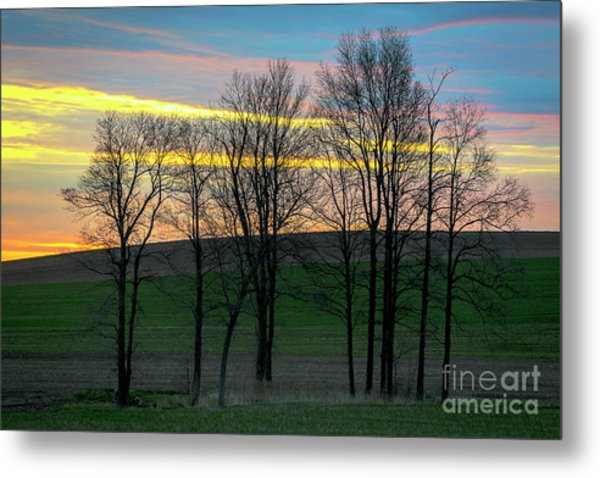 Rainbow Color Tree Horizon Metal Print