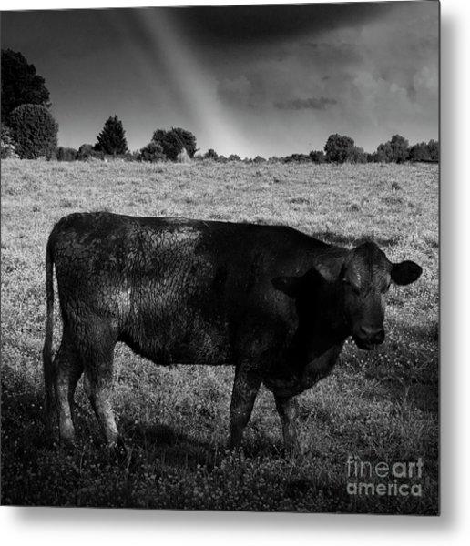 Rainbow Cow Metal Print