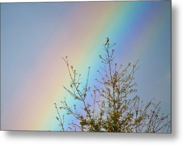 Rainbow Metal Print by Laurie Hasan