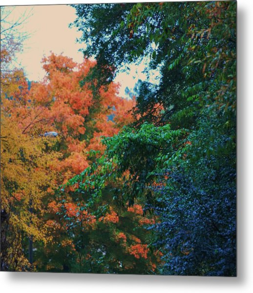 Rainbow Of Fall Metal Print by Trudi Southerland