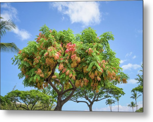 Metal Print featuring the photograph Rainbow Shower Tree 1 by Jim Thompson
