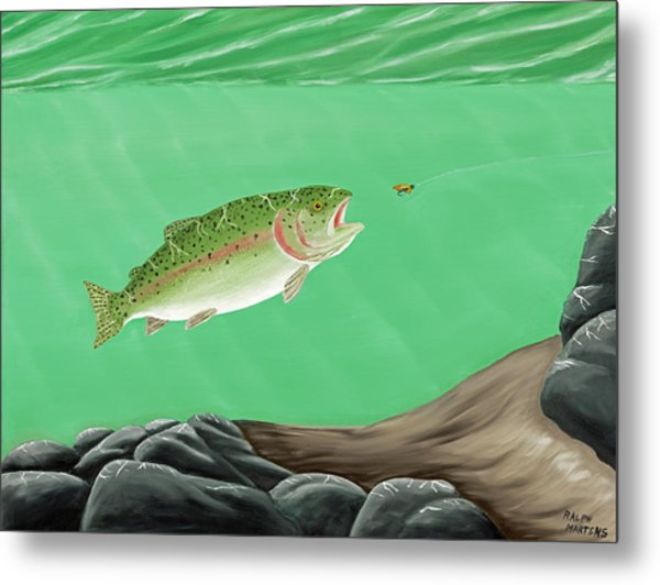 Rainbow Trout - Enticed From The Pool Metal Print by Ralph Martens