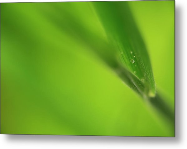 Raindrop On Grass Metal Print