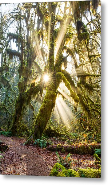 Rainforest Magic Metal Print