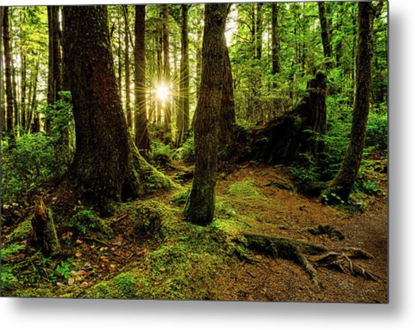 Rainforest Path Metal Print