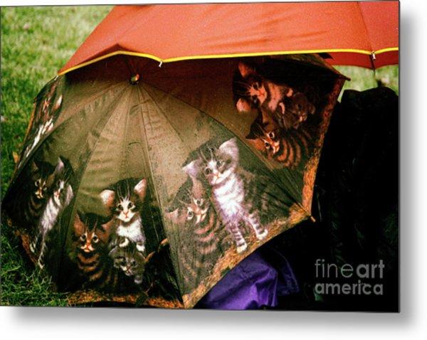 Raining Cats  Metal Print by Steven Digman