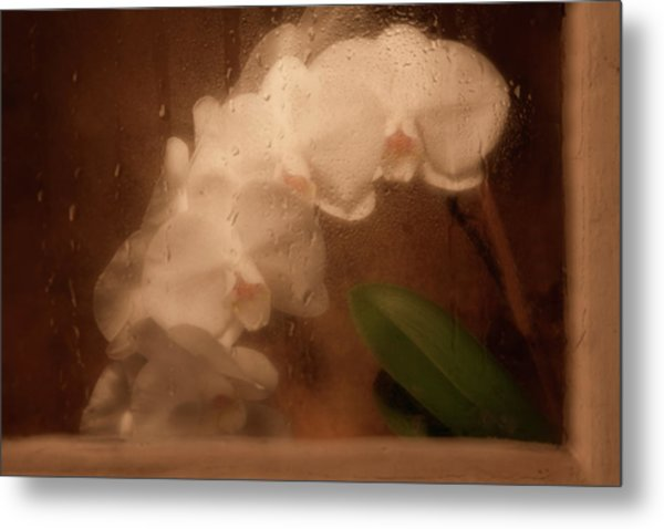Rainy Day Orchid Metal Print