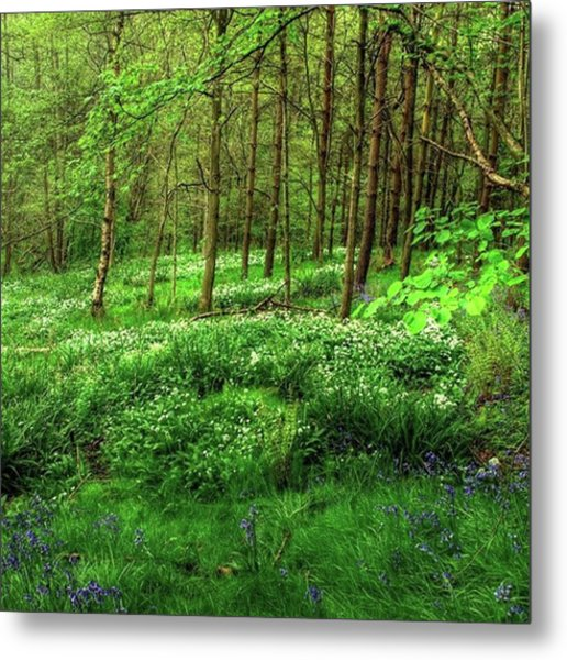 Ramsons And Bluebells, Bentley Woods Metal Print