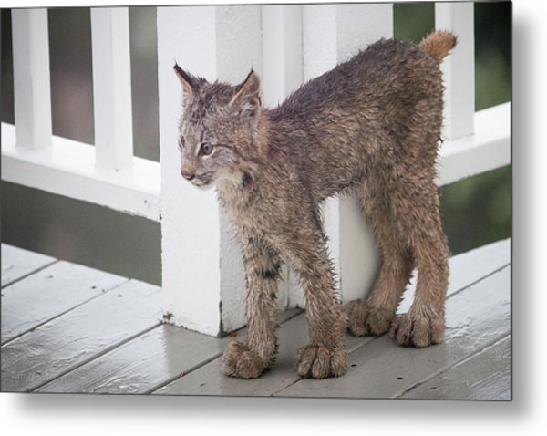 Metal Print featuring the photograph Laser Eyes Big Feet by Tim Newton