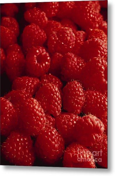 Raspberries Metal Print by Kim Lessel