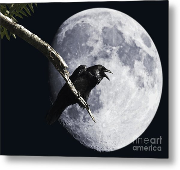 Metal Print featuring the photograph Raven Barking At The Moon by Wingsdomain Art and Photography