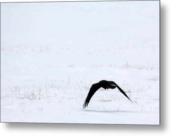 Raven In The Snow Metal Print