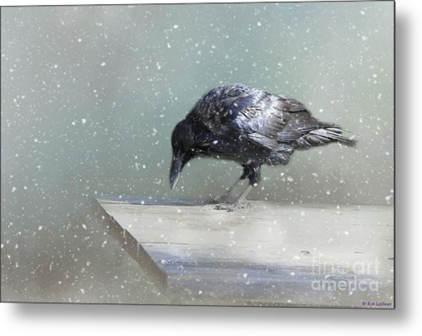 Raven In Winter Metal Print