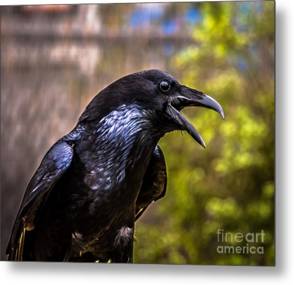 Raven Profile Metal Print