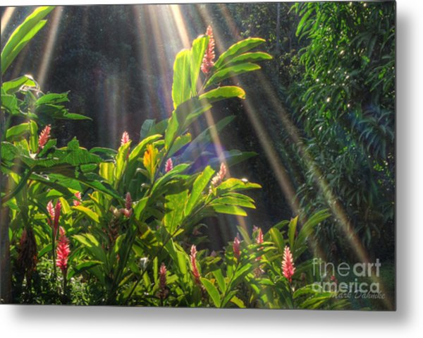 Rays Of Sunlight Metal Print