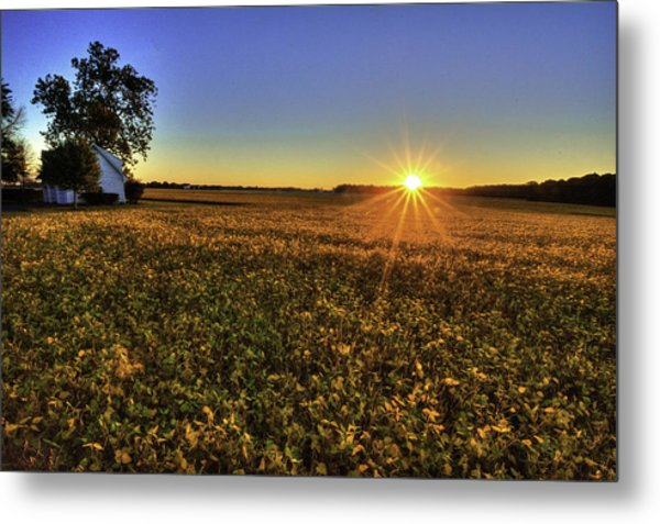 Rays Over The Field Metal Print