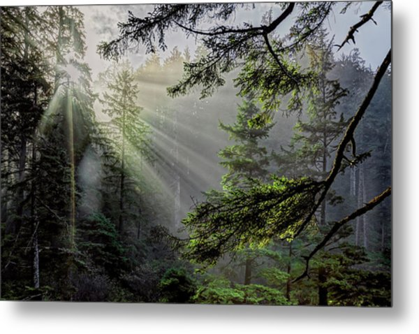 Morning Rays Through An Oregon Rain Forest Metal Print