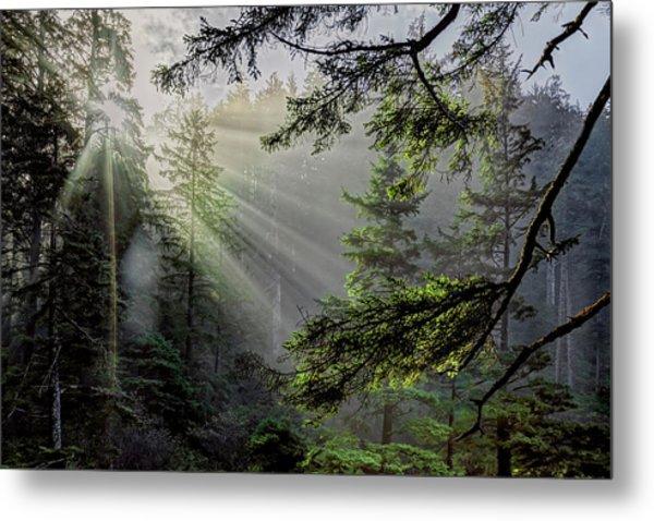 Rays Through An Oregon Rain Forest Metal Print
