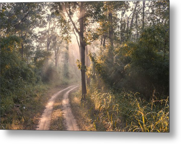 Rays Through Jungle Metal Print