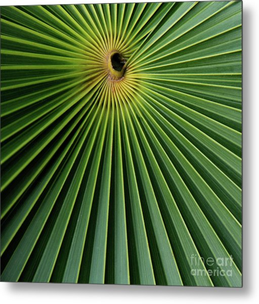 Razzled Rays Mexican Art By Kaylyn Franks Metal Print