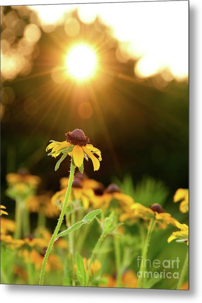Reaching For Evening Sun Metal Print