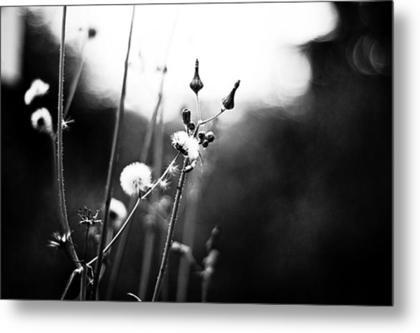 Reaching For The Light Metal Print by  Kelly Hayner