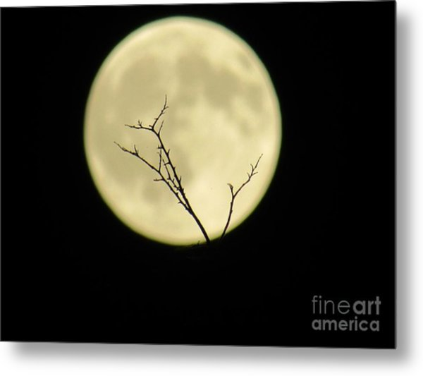 Reaching Out Into The Night Metal Print