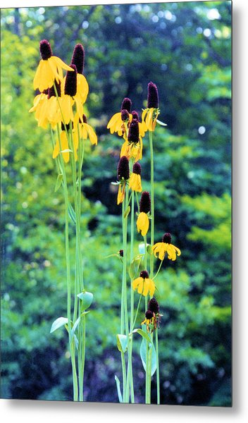 Reaching Up Metal Print by Jan Amiss Photography