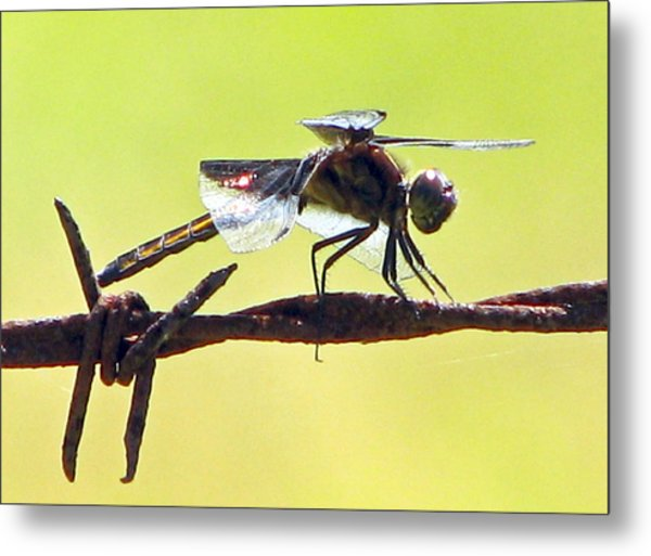 Ready For Takeoff Metal Print by Lonnie Tapia
