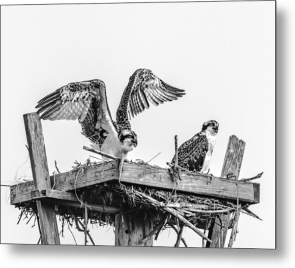 Ready To Fly Bw Metal Print