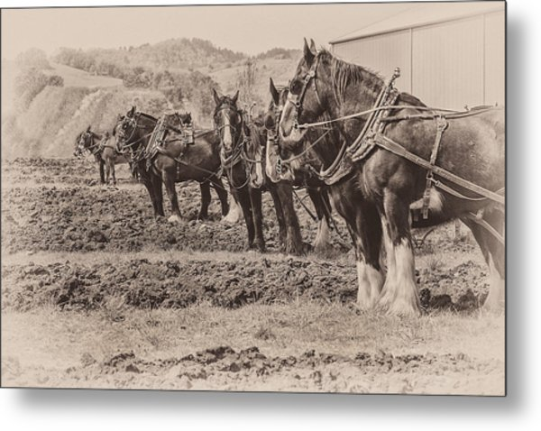 Ready To Plow Metal Print by Joe Hudspeth