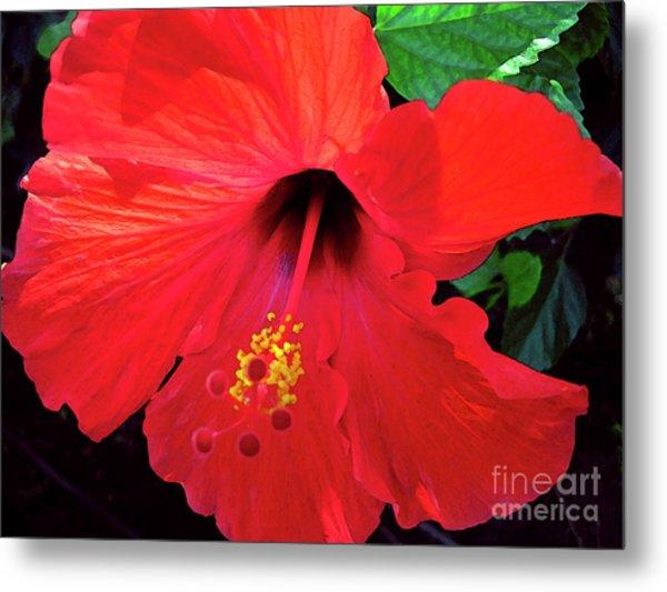 Reb Hibiscus Flower Metal Print