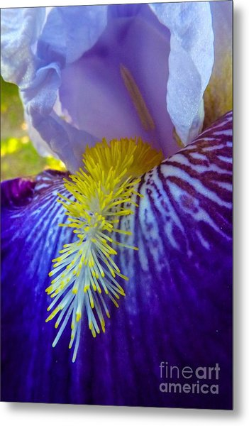 Recollection Spring 1 Metal Print