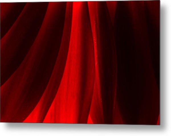 Red Abstract Of Chrysanthemum Wildflower Metal Print
