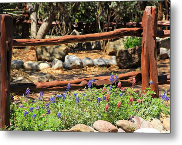 Red And Bluebonnets Metal Print