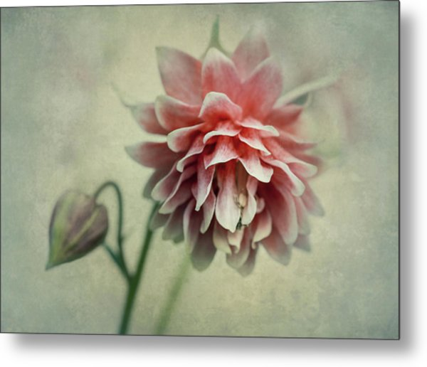 Red And Pink Columbine Metal Print