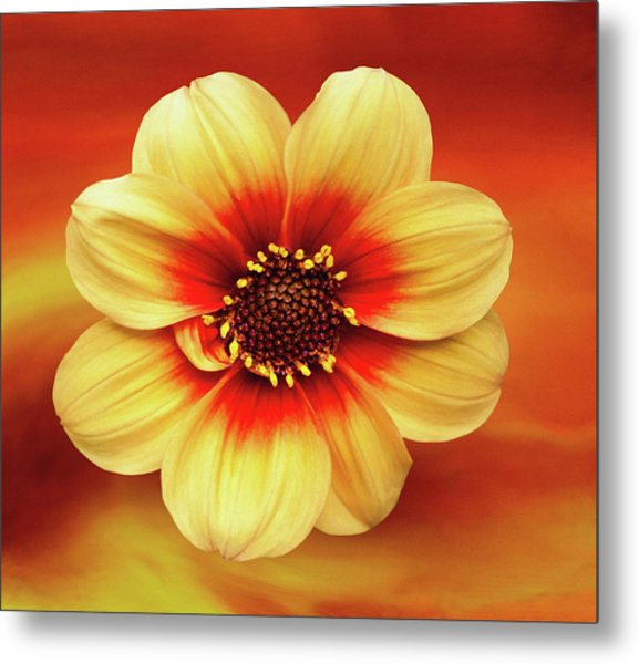 Red And Yellow Inspiration Metal Print