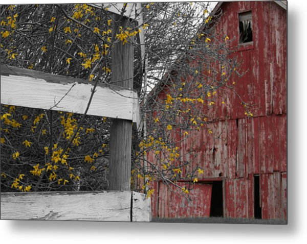Red Barn And Forsythia Metal Print