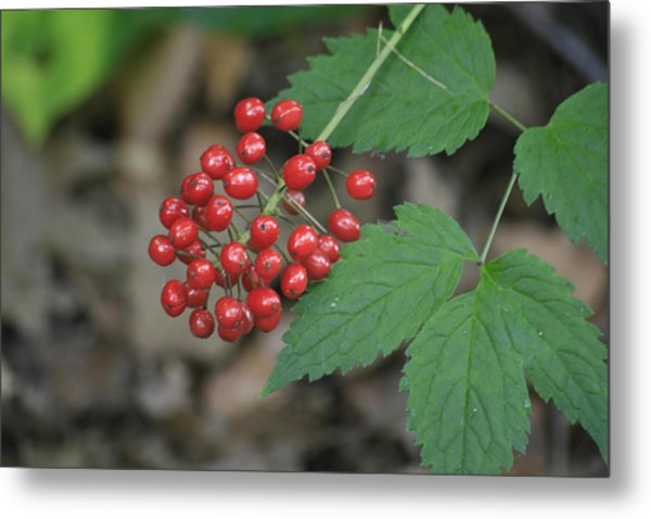 Red Bead Metal Print by Alan Rutherford