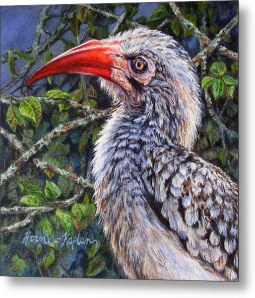 Red Billed Hornbill Metal Print