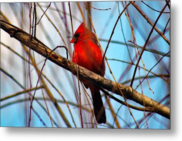Red Bird Sitting Patiently Metal Print