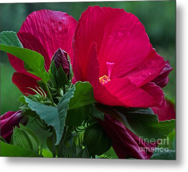 Red By The Pond Metal Print
