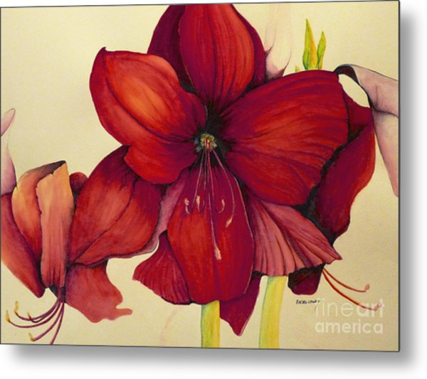 Red Christmas Amaryllis Metal Print