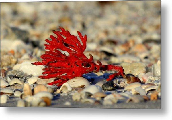 Red Coral Metal Print