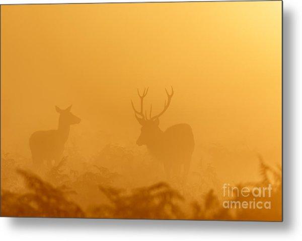 Red Deer At Sunrise Metal Print