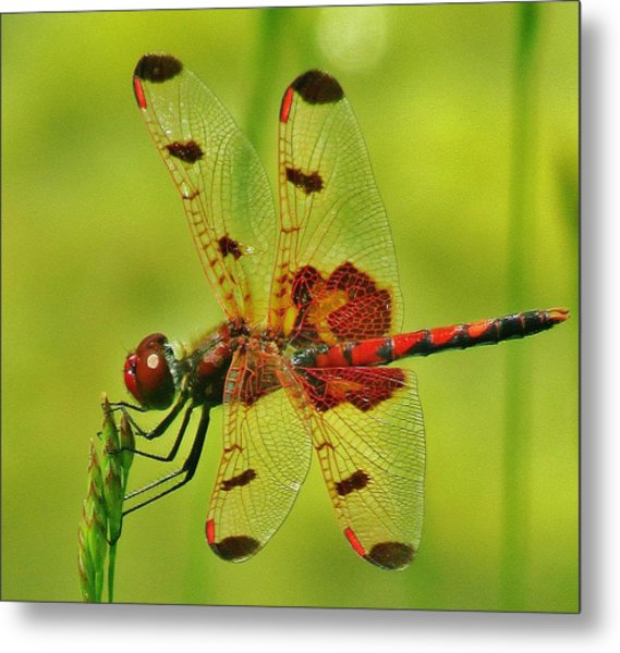 Red Dragonfly Metal Print by Thomas  McGuire