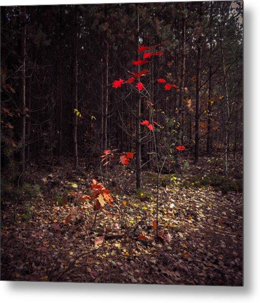 Red Drops Metal Print