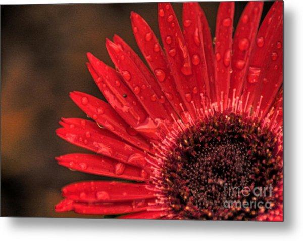 Red Flower 2 Of 2 Metal Print